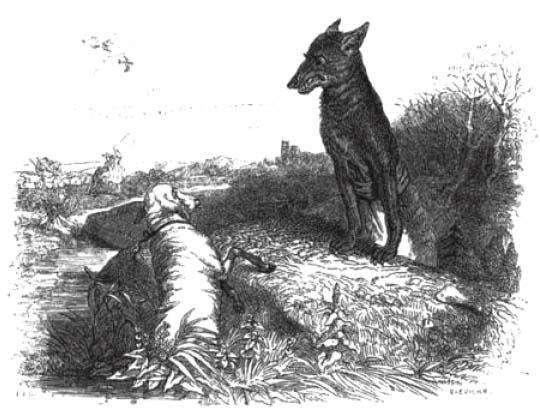 Le loup l 39 agneau grandville le grand m chant loup - Dessin loup et agneau ...