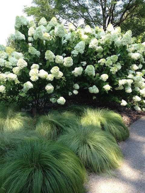 Love this!! Combination of hydrangea and grass!