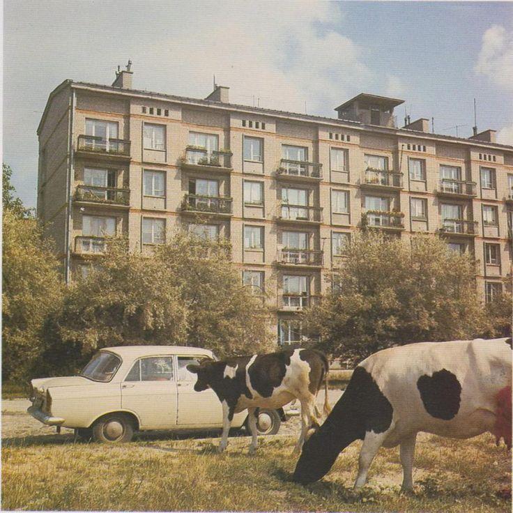 Bielany 1978-1983