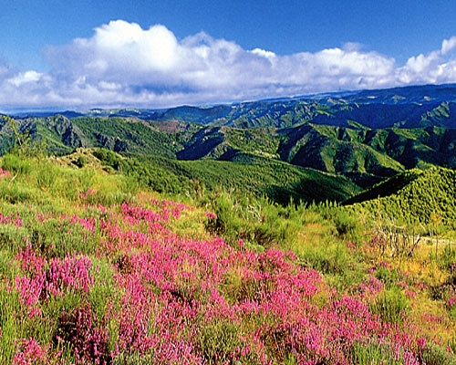 Cevennes National Natural Park    The Cevennes National Park is mainly located in the departments of Lozere and Gard, and Ardeche and Aveyron too. More than 40,000 people live in these highlands with 1,000m of average altitude. A rich flora (2250 species) and a diversify fauna (2410 species) will fill you with wonder through the 4,000 kilometres walk.