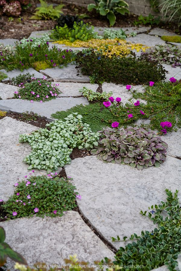 Perennial groundcovers planted between pieces of irregularly shaped  flagstone forming 'crazy paving'.