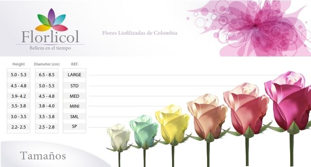 Flores Preservadas en Venta - Regalos / Juguetes - Todo Colombia