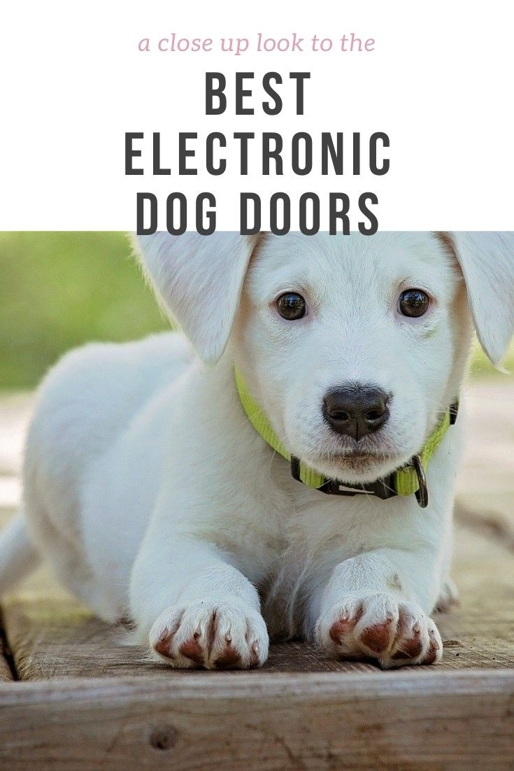 Best Electronic Dog Doors Under The Sun. #dogdoor #dog #electronicdogdoor #pet #homedecor