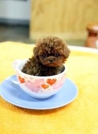@Dandelian Bagby Bagby- Uhhhhh PLEASE can we get her???? Mochi- FRENCH BULLDOG FEMALE PUPPY San Diego, CA. A cute female French Bulldog puppy for sale in San Diego, CA 92029.