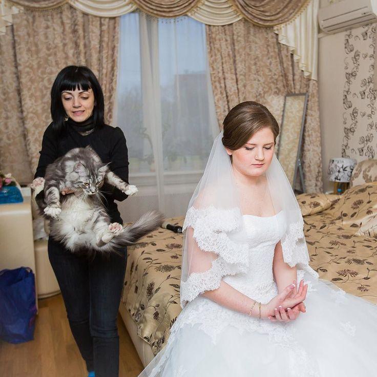 http://www.youtube.com/channel/UCqEqHuax3qm6eGA6K06_MmQ?sub_confirmation=1 Очень люблю животных но вот кошки не очень любят меня #makeupartist #makeupartistmoscow  #Weddinghairstyle #wedding2016 #sashazinovyeva #makeupmoscow  #свадебныйстилист  #стилистмосква  #свадебныйстилистмосква #свадебныймакияж #bride #bridalstyle #bridalmakeup #makeup  #visage #визажист #визажистмосква#makeupartist #makeupartistmoscow  #визажистмосква #wedding2016  #anastasiabeverlyhills #UrbanDecay #сашазиновьева…