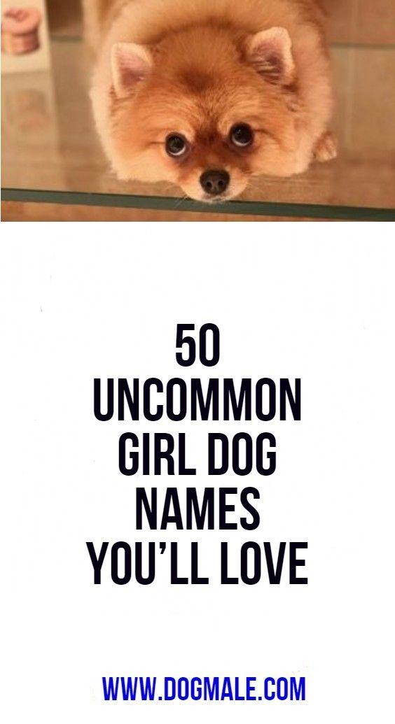 50 Uncommon Girl Dog Names You Ll Love Girl Dog Names Dog Names