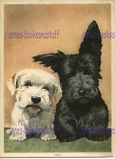 1941 print by Reproducta Inc  #259 PALS Scottie and Westie dogs