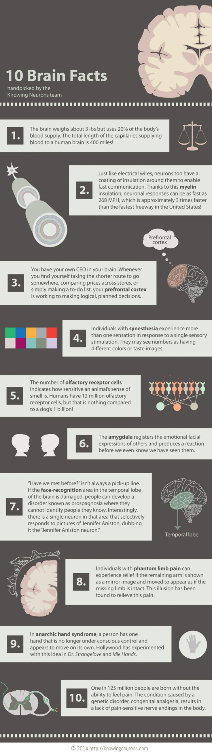 10 Brain Facts #infographic                                                                                                                                                      More