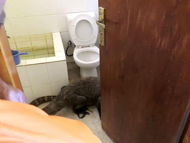 Planet Earth cameraman finds huge Komodo dragon in hotel bathroom