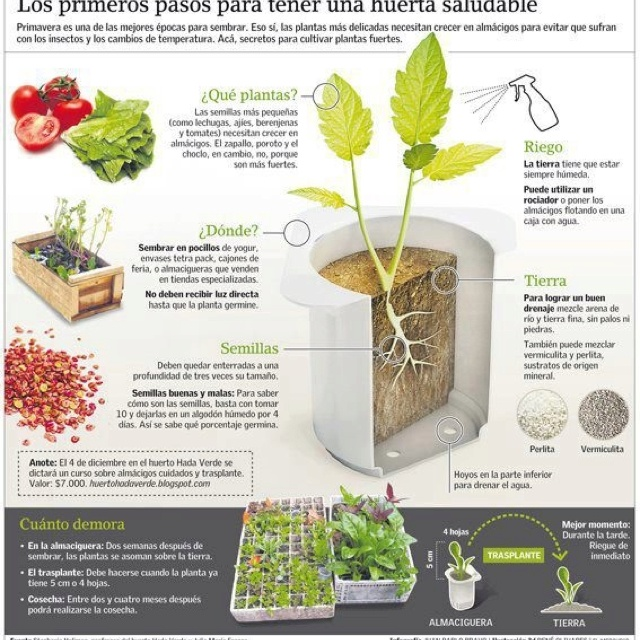 10 Vegetables You Can Regrow Yourself From Kitchen Scraps: Pinterest