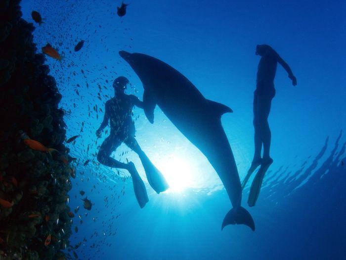 1001 Ideen Zum Thema Schone Delfine Bilder Deep Sea 3d
