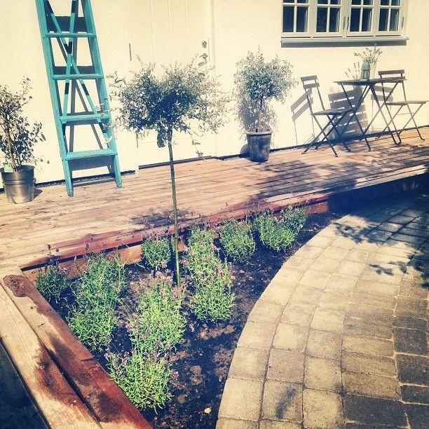Platsbesök: Örja KyrkbyTrädgården börjar ta form, här en nyplanterad lavendel rabatt.#emrahus #garden #inspiration och silverpäron