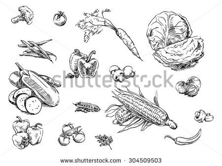 Sketches of food: vegetables - stock vector