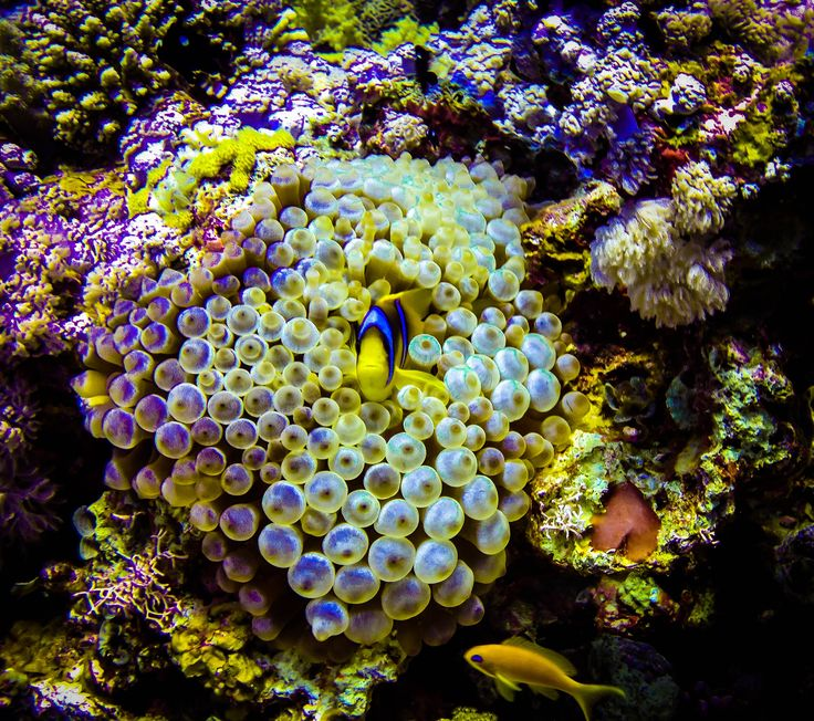 underwater architecture essay