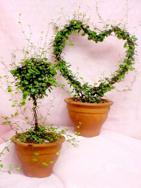 Hanging Vine Plants
