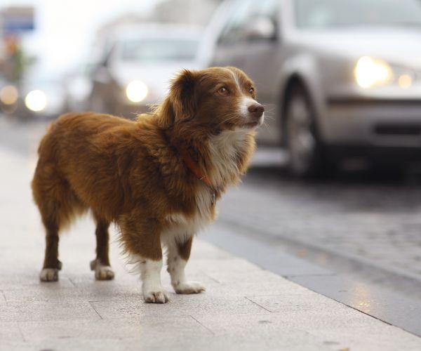 ONGs e empresas iniciam campanhas na internet para localizar cãezinhos perdidos - Foto: Divulgação / Pedigree
