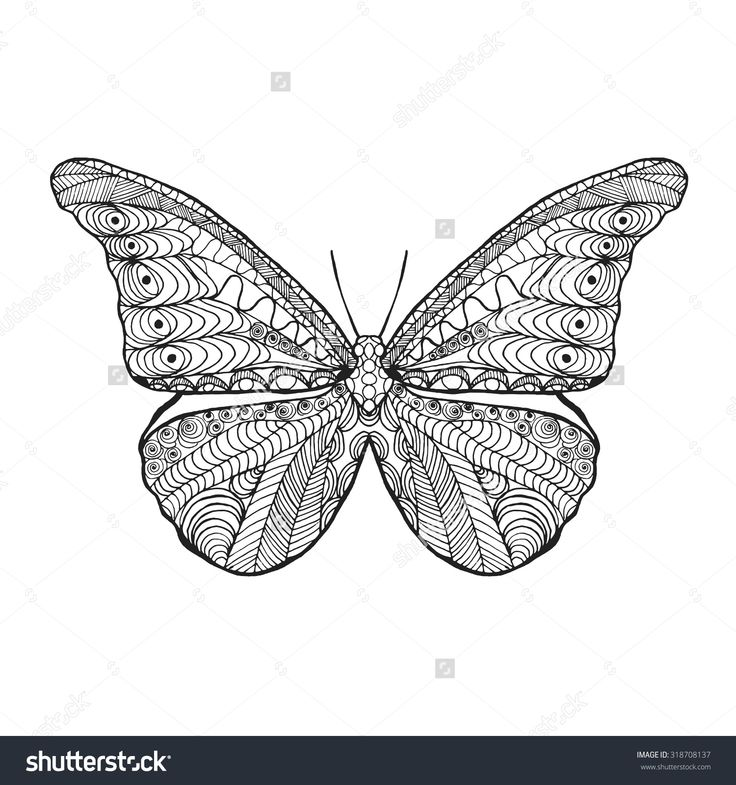 Zentangle Stylized Butterfly Black White Hand Drawn Doodle Animal Ethnic Patterned Vector Illustration
