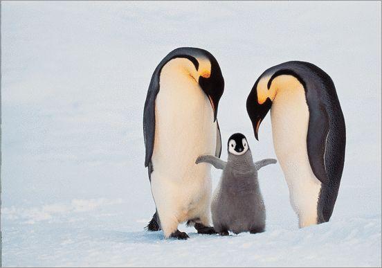 Oog in oog, Frans Lanting #Pinguïn #Photo