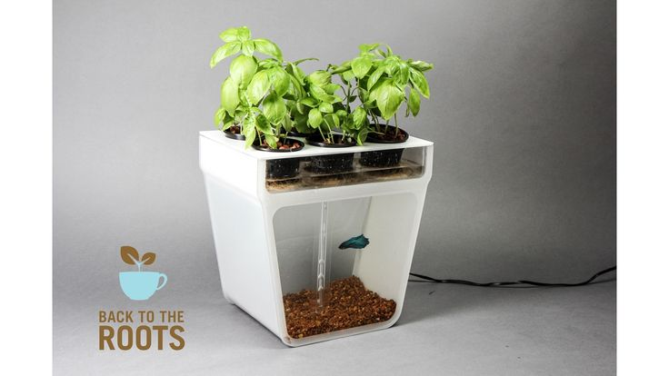 Home Aquaponics Kit: Self-Cleaning Fish Tank That Grows Food by Nikhil & Alejandro — Kickstarter
