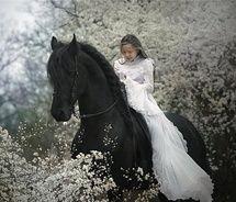 black beautyLittle Girls, Dreams, Beautiful, Black White, Black Horses, Wedding Pictures, Animal, Little Princesses, Fairies Tales