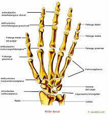 Resultado de imagen para dibujo de los huesos de las extremidades inferiores