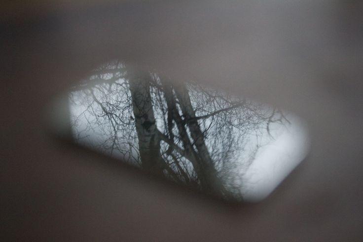 Puut heijastuvat puhelimesta.