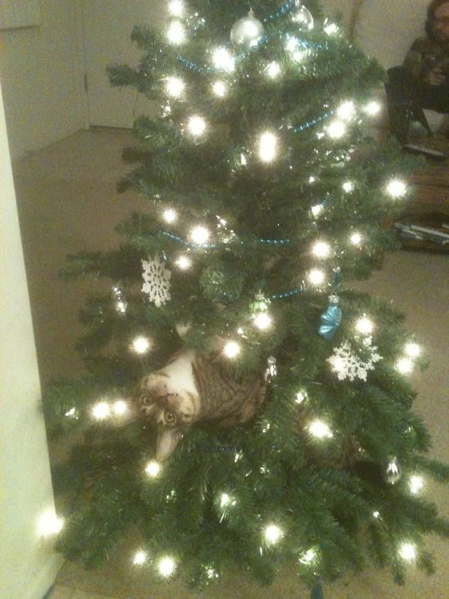 Wazzup? A Hilarious Compilation Of The Constant Battle Between Cats & Christmas Trees • BoredBug