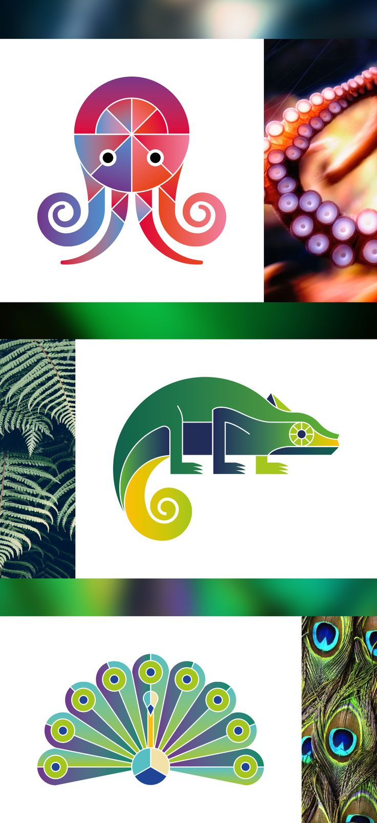 Logos, animaux, pieuvre, octopus, caméléon, chameleon, paon, peacock, agence communication, graphiste www.ehopdesign.fr