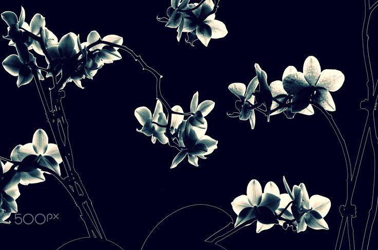 Orchidaceae - null