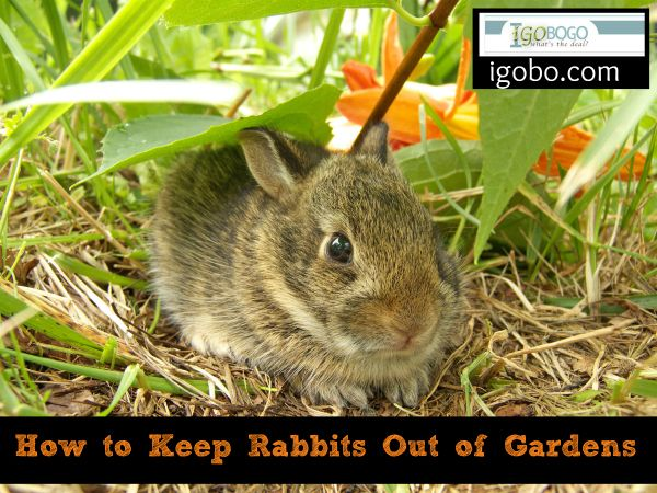 How To Keep Rabbits Out Of Gardens Growing Your Own Pinterest