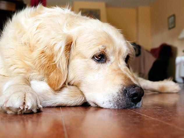 How Do I Know If My Dog Has Allergies Allergies The Two