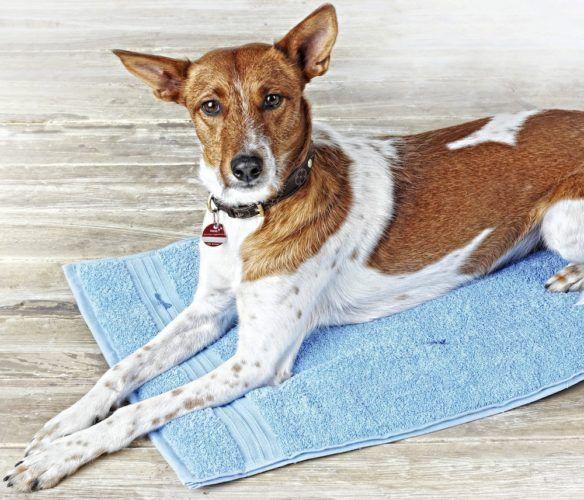 Sy smart extrabädd till vovven! Du behöver: • Två handdukar i rimlig längd och bredd för att passa din hund • Vadd att lägga emellan • Symaskin/nål och tråd • Eventuellt stoppnål och bomullsgarn till quiltning