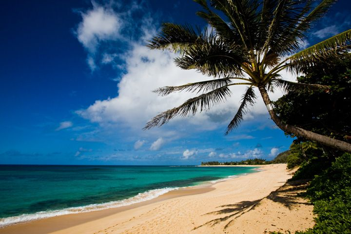 Costa norte de Oahu, vida marina en Pupukea, en Hawái