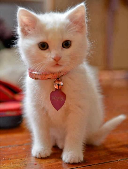 37 Best Cute Cats And Kittens Images On Pinterest Kitty