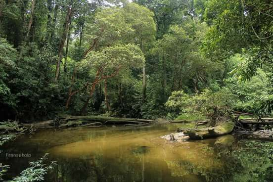 Bengkayang, rainforest