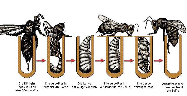 32 besten Bienen Bilder auf Pinterest | Bienen, Baby und Bienenparty