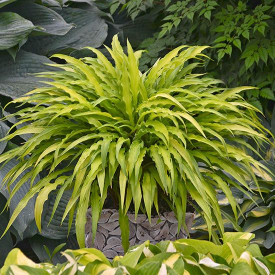 best shade garden plants images on, Natural flower