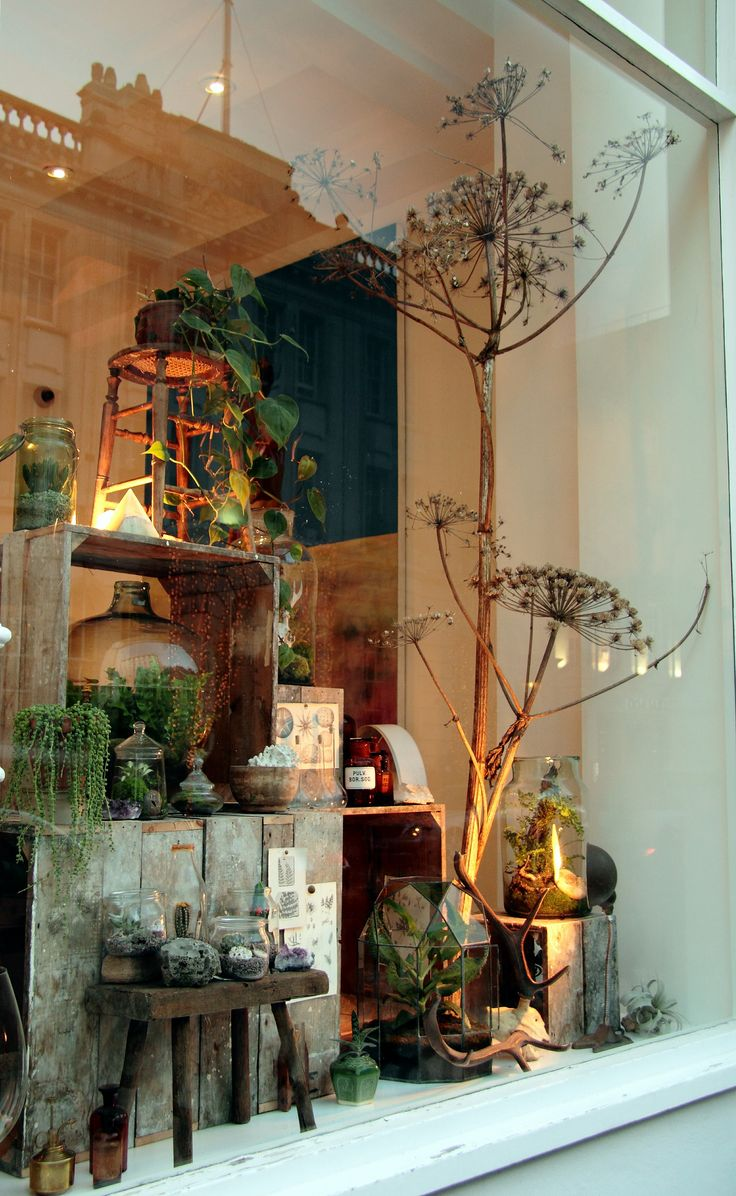 I gave an Autumnal, slightly gothic subtle twist to my window display at The Mill in time for Halloween. I have been finding original Wardian cases and animal skulls to add to the display as well as the tall vases with carnivorous plants.