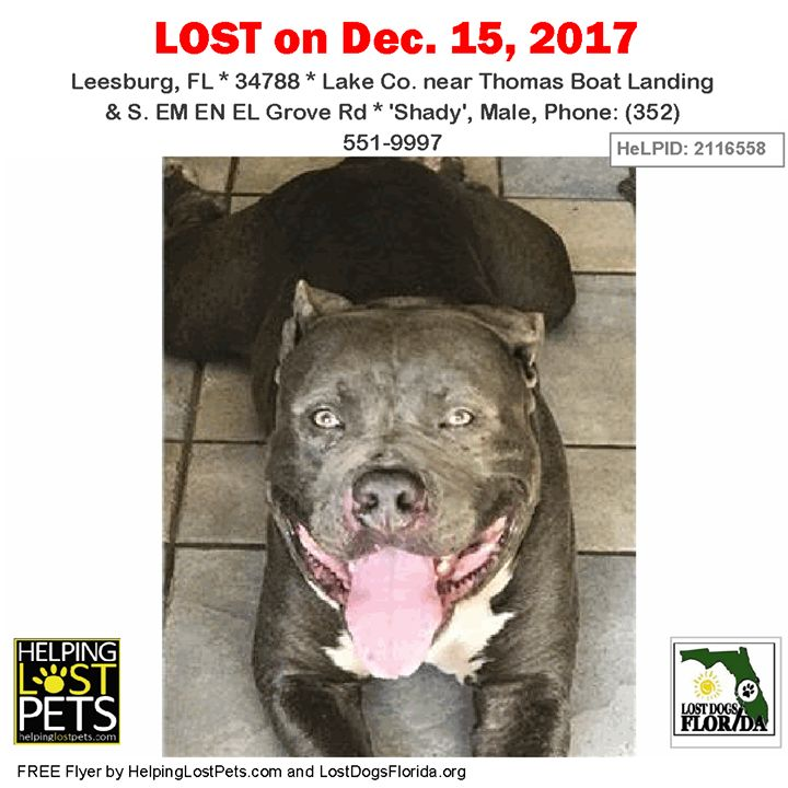 Please spread the word!  Shady was last seen near Thomas Boat Landing & S. EM EN EL Grove Rd in Leesburg.  He is a grey and white male Pit Bull.  Contact: (352) 551-9997  No medical problems - but missing hair in the middle of tail  Shady is a very friendly pit bull. He is loved and missed. His fur brother has been very depressed since he has been gone. They have been together since birth. Shady will be 5 in March. He has his ears and tail.   More info photos to see this dog's location on a…