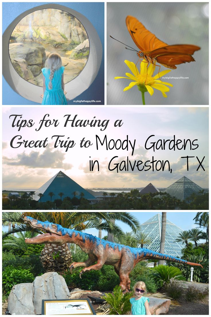 Tips for Having a Great Time at Moody Gardens in Galveston, Texas | mybigfathappylife.com