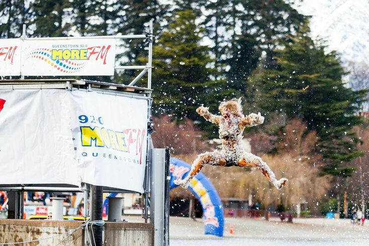 Some contestants in the More FM Birdman took the competition quite literally #winterstartshere #Queenstown #NewZealand