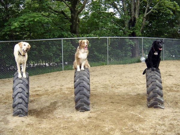 Buried semi or tractor tires for puppy play time! This is ...