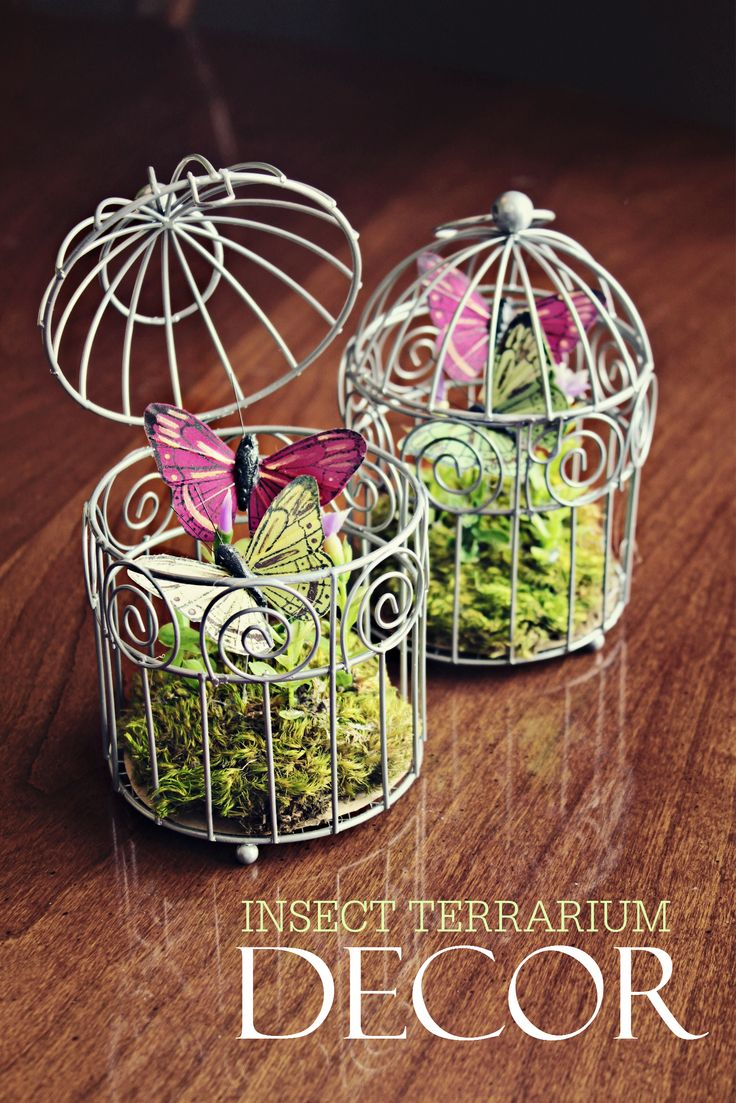 Insect Terrariums - Butterflies - Spring Decor - Crafts -  -  For more great craft Ideas visit:  http://www.christopherhiedeman.com