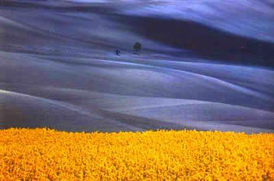 The other peephole: Franco Fontana: The Landscape Light