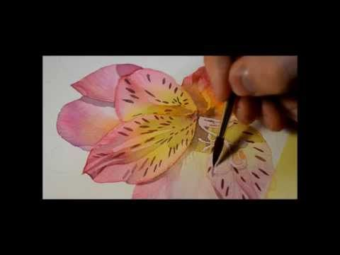 Alstroemeria flower part 1 - watercolor by Krzysztof Kowalski