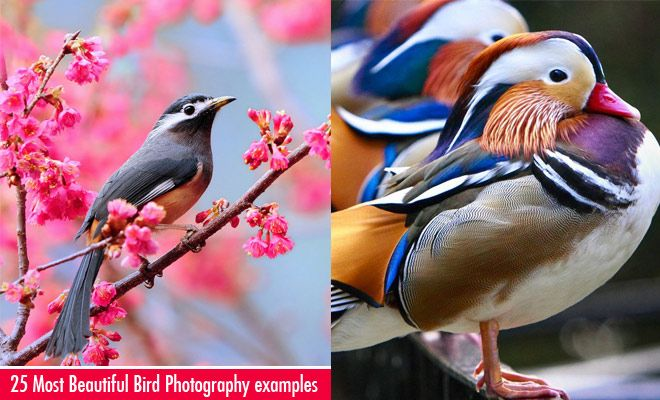 25 Most Beautiful Bird Photography examples and Tips for Photographers. Follow us www.pinterest.com/webneel