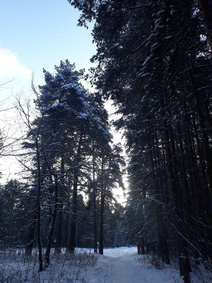 Балатовский парк зимой ❄