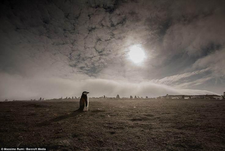 Massimo Rumi queria uma nova experiência na vida e conseguiu num yatch de nove pessoas, a caminho da Antárctida.