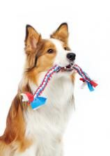 The Dog Trainer : Playing Tug-of-War with Your Dog :: Quick and Dirty Tips ™