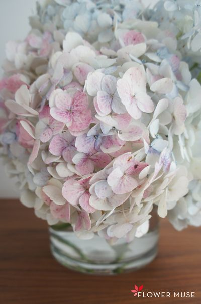 Read our hydrangea care and handling guide to learn floral care tips for cut hydrangeas and tricks to revive wilted hydrangea blooms.